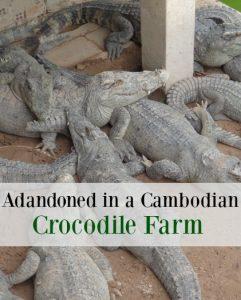 crocodile cambodia