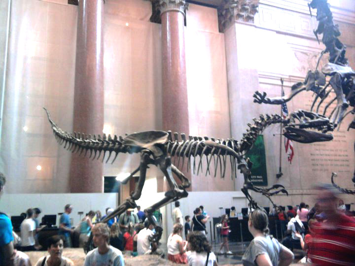 New York Natural History Museum Manhattan