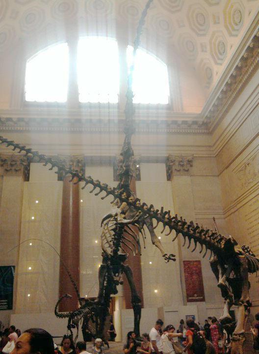 New York Natural History Museum Manhattan