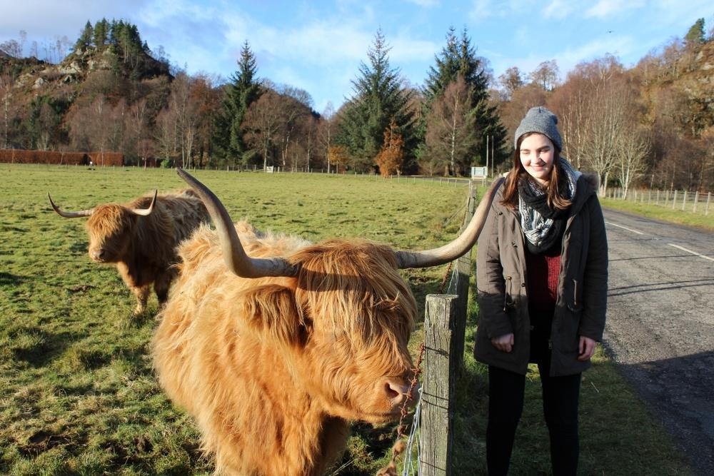 Highland Cow Coo Loch Lomond