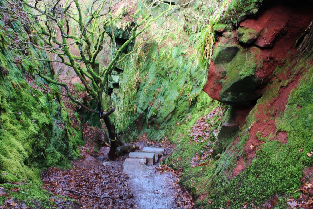 Devils Pulpit and Finnich Glen, Jacob's Ladder