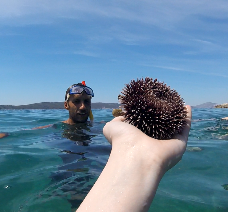Kayaking, Cliff Jumping & Snorkeling in Split, Croatia with Red Adventures - Sea Urchin